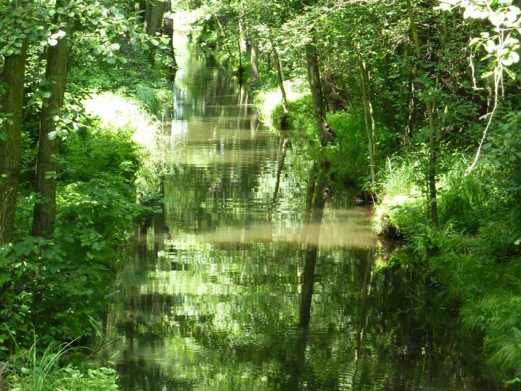 Dschungel mittten in Deutschland