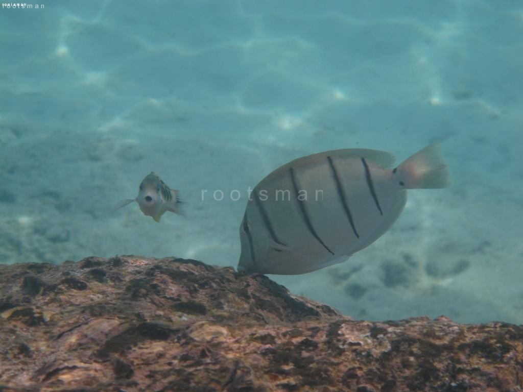 Thailand, Khao Lak - Deep Sea :-)